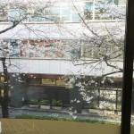 ☆桜☆のサムネイル